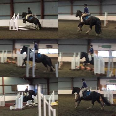 horse, equestrian, cob, arab, showjumping