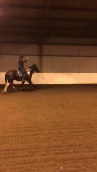 horse, equestrian